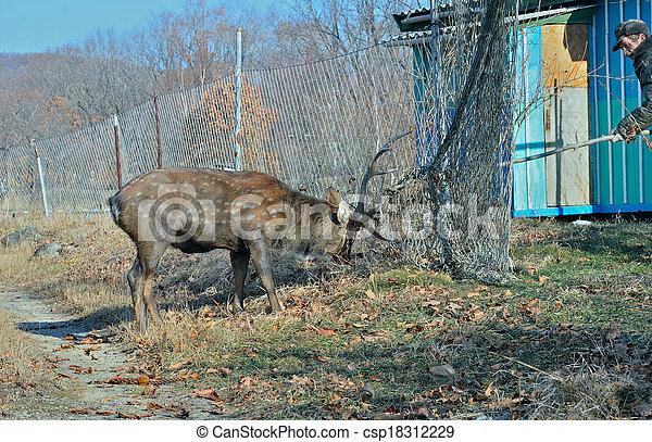 Rescue of deer 2 - csp18312229