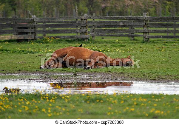 RESTING HORSES  EVERETT WASH. - csp7263308