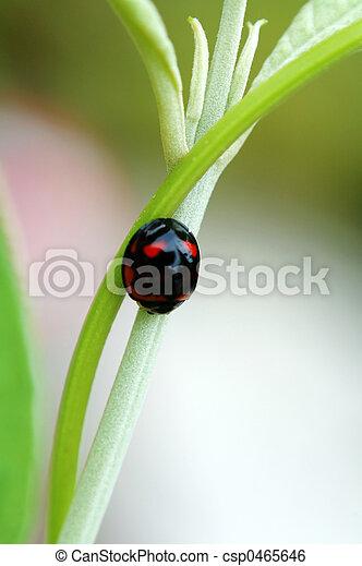 Resting ladybird - csp0465646