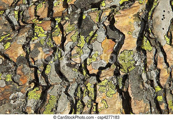 Shale y Lichen abstracto - csp4277183