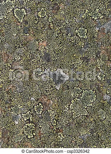 Lichen abstracto - csp3326342