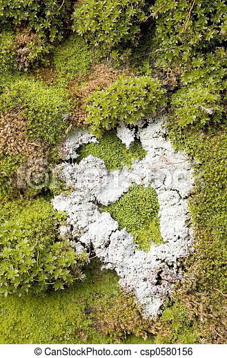 Moss y Lichen abstract - csp0580156