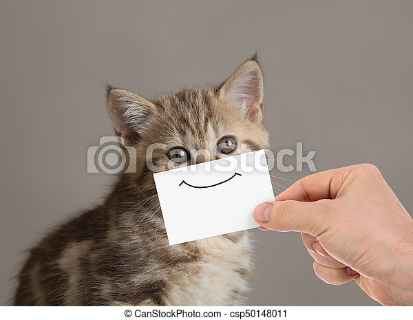 retrato, divertido, cartón, sonrisa, gato - csp50148011