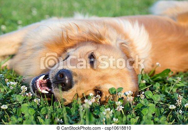 retrato, jovem, beleza, cão - csp10618810