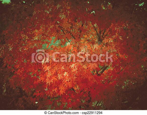 Retro look Maple leaves - csp22911294