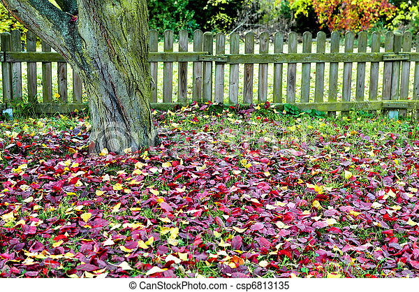 Retro scenery with a tree, ted autumn leaves on green grass and an old fence - csp6813135