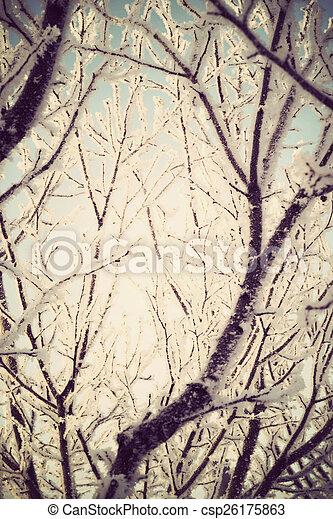 Retro Trees in Hoarfrost - csp26175863