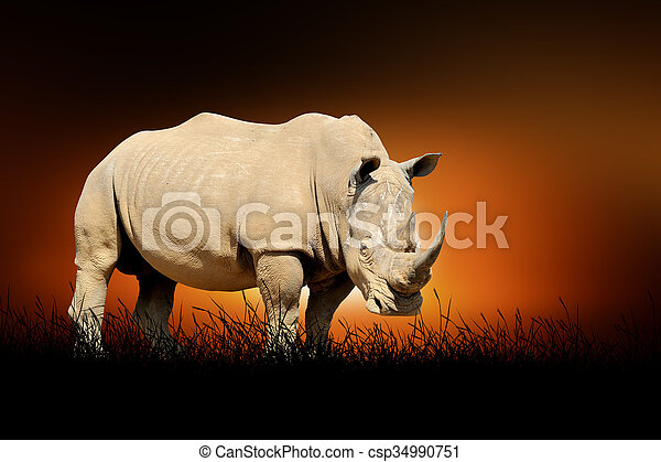 Rhino on the background of sunset - csp34990751