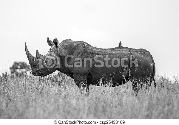 Rhino Profile - csp25433109