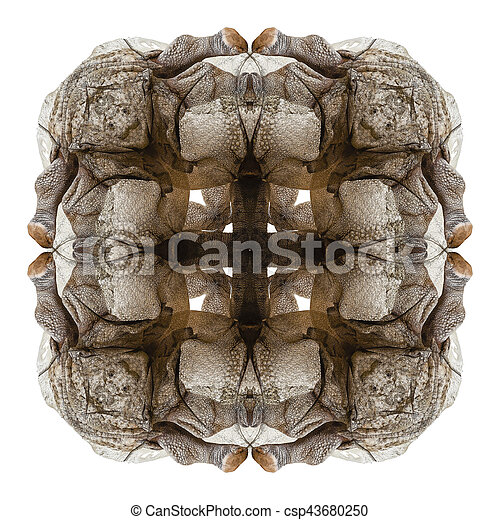 rhinoceros abstract 1 - csp43680250