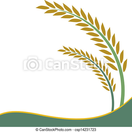 Rice design on white background - csp14231723