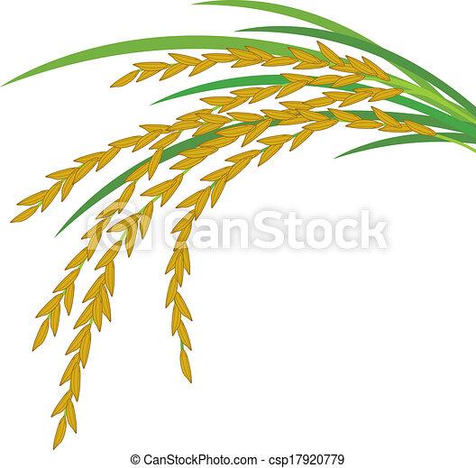 Rice design on white background - csp17920779