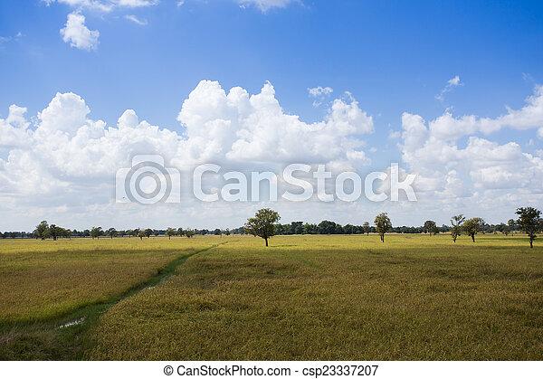 Rice field in blue sky - csp23337207