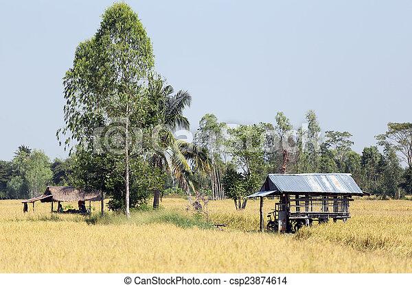 Rice fields in rural. - csp23874614