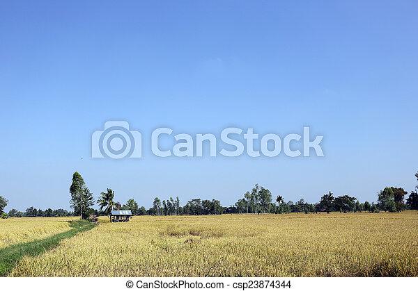 Rice fields in rural. - csp23874344