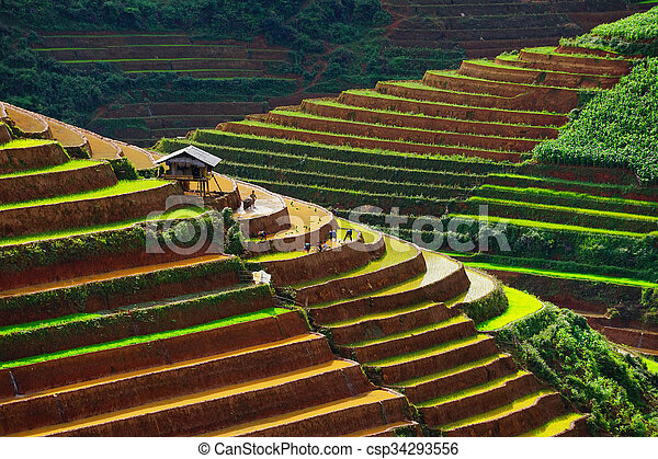 Rice fields on terrace in rainy season at Mu Cang Chai, Vietnam. - csp34293556