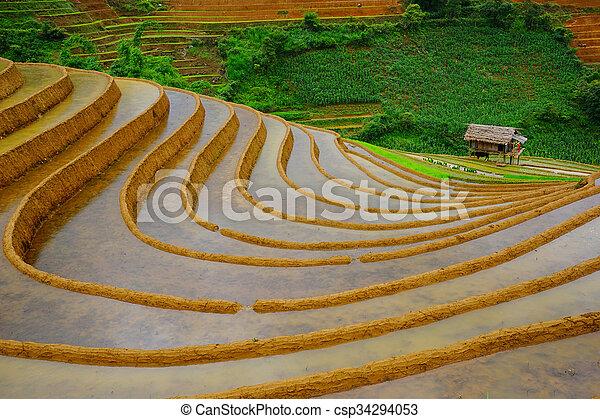 Rice fields on terrace in rainy season at Mu Cang Chai, Vietnam. - csp34294053