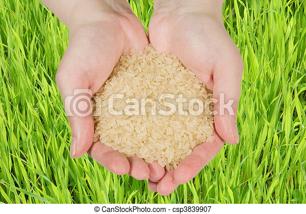 Rice in woman's hands - csp3839907