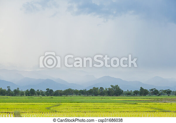 rice plant farmers planting rice. - csp31686038