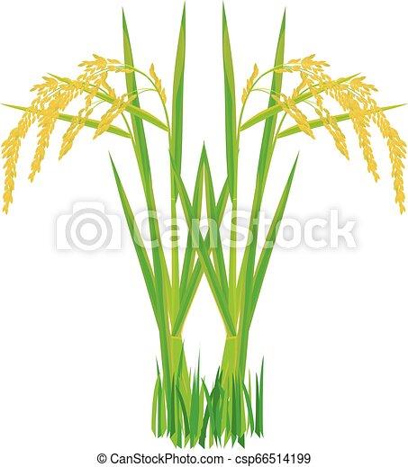 rice plant on white background vector design - csp66514199