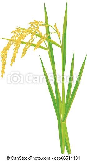 rice plant on white background vector design - csp66514181