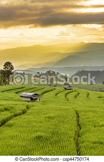 Rice Terraces with sunset scene at Ban Papongpieng, Chiangmai Thailand - csp44750174