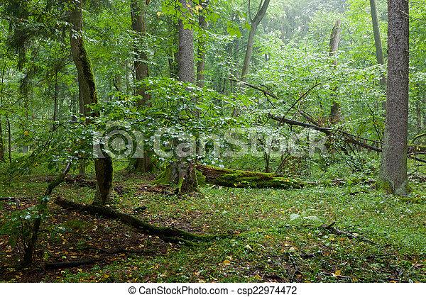 Rich deciduous stand in rain - csp22974472
