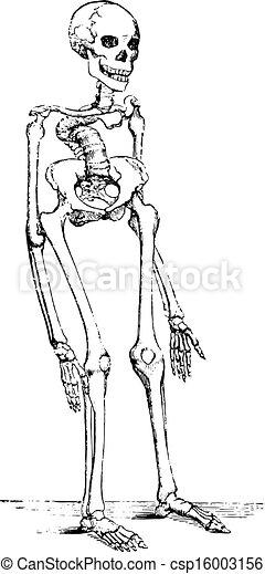 rickets, deformerat, skelett - csp16003156