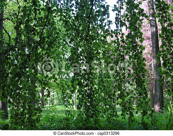 petit rideau feuilles for t image de stock recherchez photos et clipart csp0313296. Black Bedroom Furniture Sets. Home Design Ideas
