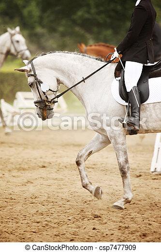 Riding horse - csp7477909