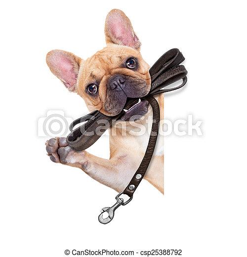 riem, dog, gereed, wandeling - csp25388792