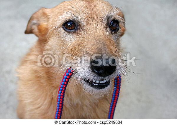 riem, dog - csp5249684