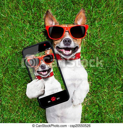 rigolote, selfie, chien - csp20550526