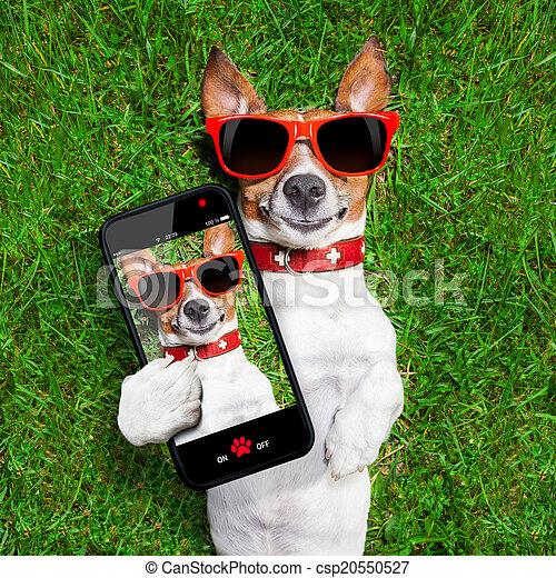 rigolote, selfie, chien - csp20550527