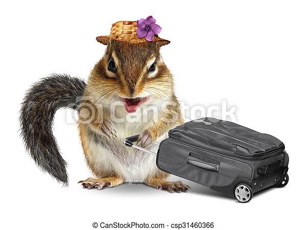 Rigolote, voyageur, écureuil rayé, animal, valise, blanc ...