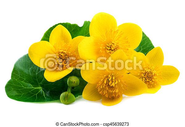 Ringelblume, freigestellt, gelber , sumpf, weisse blumen.... Bild ...