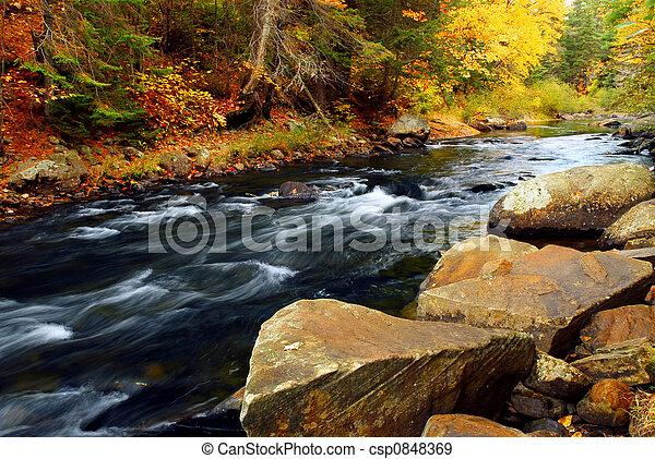 rio, floresta, outono - csp0848369
