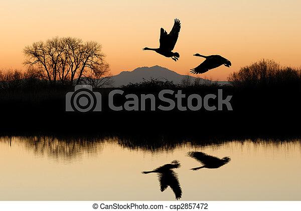 Reflexión de ganso y rústico - csp2857472