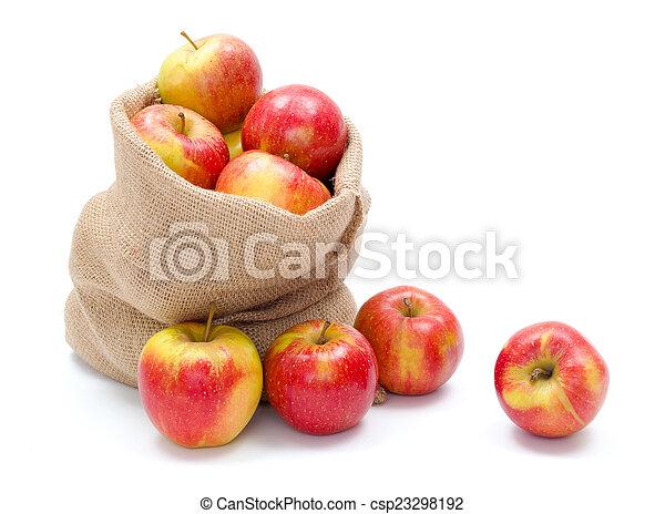 Ripe apples in burlap sack - csp23298192