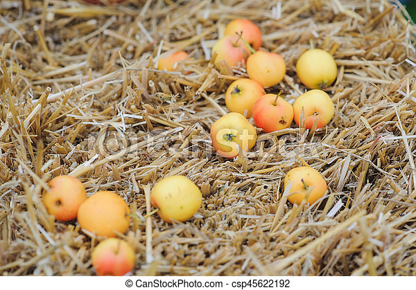 Ripe apples on a bale of hay - csp45622192
