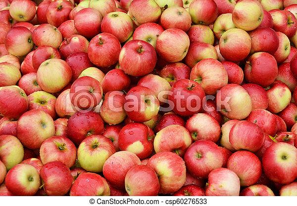 Ripe apples - csp60276533