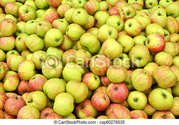 Ripe apples - csp60276535