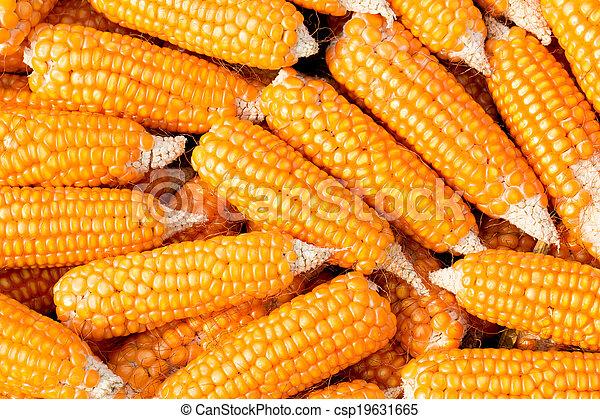 Ripe corn - csp19631665