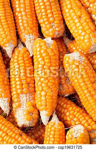 Ripe corn - csp19631725