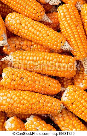 Ripe corn - csp19631729