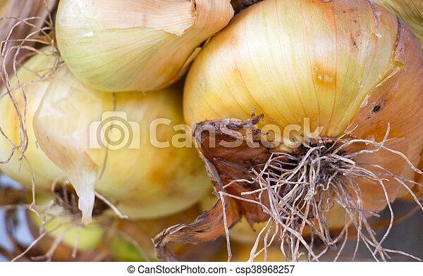 Ripe Hanging onions - csp38968257