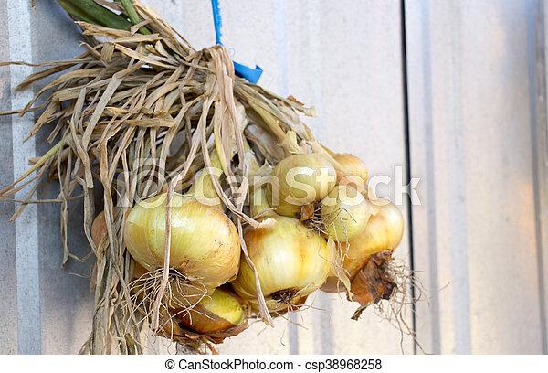 Ripe Hanging onions - csp38968258
