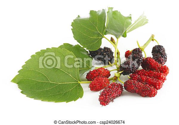 Ripe mulberry berries - csp24026674