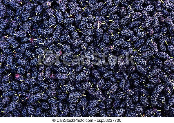 Ripe mulberry berries - csp58237700