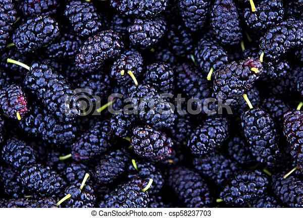 Ripe mulberry berries - csp58237703
